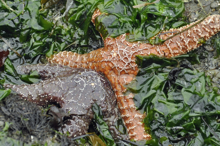 covered in kelp