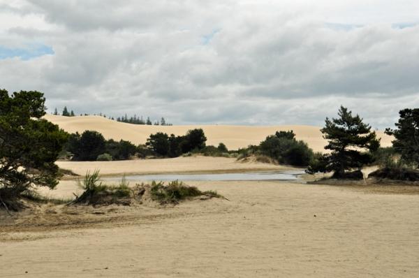 sand dunes © lynne medsker