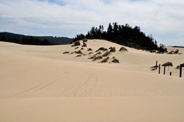 sand dune, oregon © lynne medsker