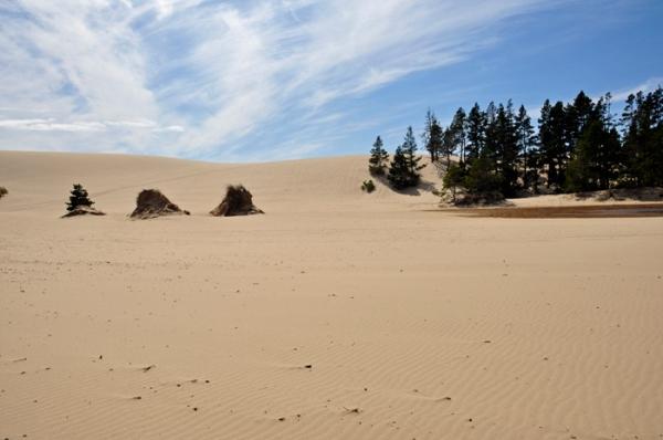 sand dunes, oregon © lynne medsker