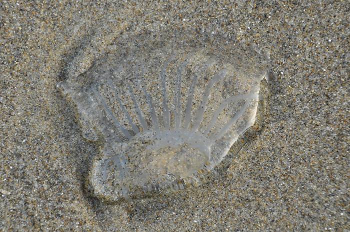 beach creature © lynne medsker