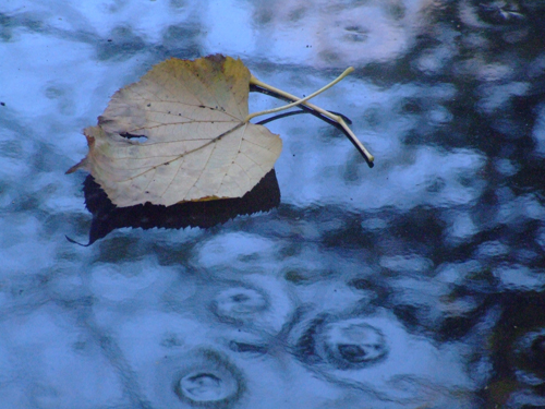 leaf reflections © lynne medsker