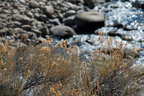 weeds & river © lynne medsker
