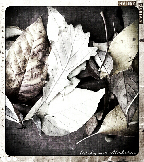 leaves 01 © lynne medsker