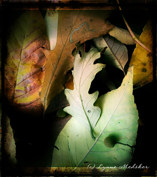 leaves 02 © lynne medsker
