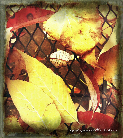 leaves 09 © lynne medsker